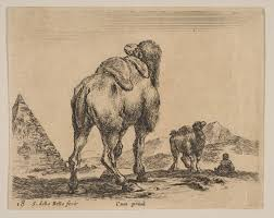 stefano della bella plate 18 camel viewed from behind with