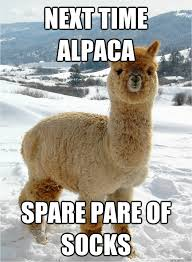 Alpaca Meme - next time alpaca spare pare of socks misc quickmeme