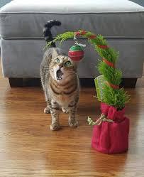 Funny Christmas Cat Memes - 41 funny christmas photos for ho ho holiday laughs team jimmy joe