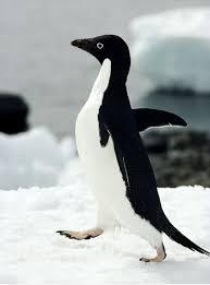 Penguin Meme Generator - socially awkward awesome penguin meme generator the best penguin