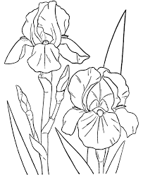 flower coloring pages spring flowers coloring color