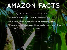 Plant Adaptation In Tropical Rainforest Amazon Rainforest By Kayla Schulz