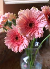 how to revive gerbera daisies christina u0027s cucina