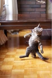 Cat Meme Generator - walking cat meme meme generator