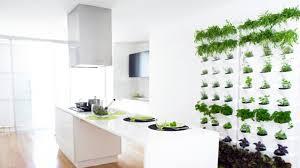 plante pour cuisine les plantes aromatiques pour la cuisine photos de design d