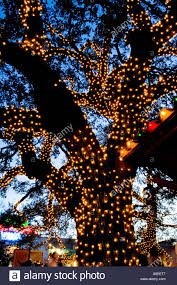 christmas lights to hang on outside tree christmas lights on an oak tree found outside gueros taco bar in