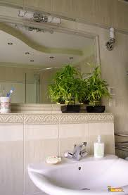 bathroom bathroom plants plant for bathroom without window