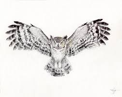 barred owl clipart flight drawing pencil and in color barred owl