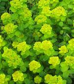 Flower Shrubs For Shaded Areas - shade loving plants make the most out of your problem areas in