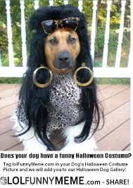 Meme Halloween - lol funny meme fan halloween dog costume gallery