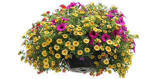 Flowers For Window Boxes Partial Shade - annual plants gulley greenhouse u0026 garden center