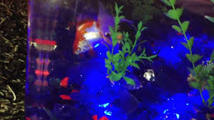 fish tank coffee table table aquarium midwest tropical 675 youtube
