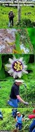 Rainforest Passion Flower - the gypsynesters seeing the rainforest for the trees