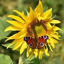 84 plants butterflies illustrated list