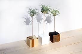 Indoor Garden Decor - diy air plant holder ceramic jack o lantern tillandsia planter