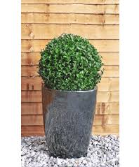 Topiary Plants Online - topiary trees and topiary ball plants
