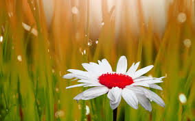 133 beautiful pictures of flower images wallpaper photos