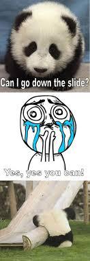 Cuteness Overload Meme - cuteness overload meme hippos funnies pinterest meme rage