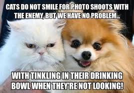 Dog Cat Meme - most adorable dogs with cats memes