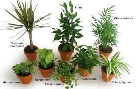 plante bureau les plantes intérieures dépolluantes ou les placer clg création