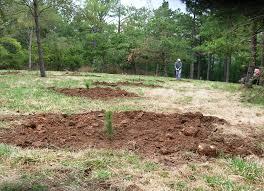 download pine tree planting solidaria garden