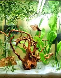 Asian Themed Fish Tank Decorations 19 Best Aquariums Images On Pinterest Aquarium Ideas Aquarium