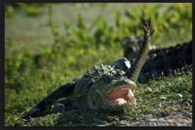 Alligator Meme - create meme crocodile crocodile alligator crocodile