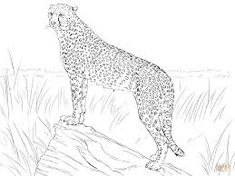 cheetah observing its prey coloring page free printable coloring