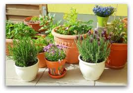 Ideas For Container Gardens Container Gardening Tips And Ideas