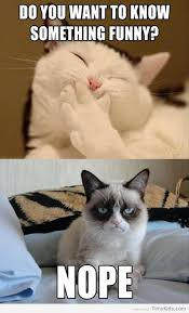 Original Grumpy Cat Meme - grumpy cat jokes for kids timykids