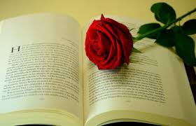 Book Wallpaper by Wallpaper Rose Flower Drop Freshness Book Text Hd Picture Image