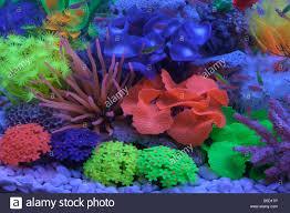 plastic coral reef for decorating aquarium Stock Royalty