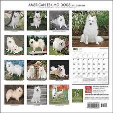 american eskimo dog intelligence wright u0027s american eskimos american eskimo dogs and puppies