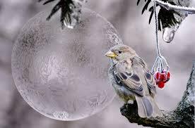 birds images Bird winter berries free photo on pixabay jpg