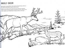 god u0027s wild creatures coloring book lighthouse trails