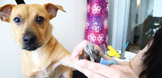 Is It Legal To Bury Your Dog In The Backyard - dog grooming tips aspca