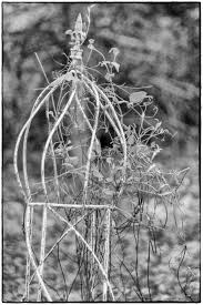 metal garden obelisk trellis u2013 photography images and cameras