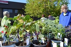 kings park native plant sale spring plant sales bloom in eastern iowa u2013 homegrown iowan