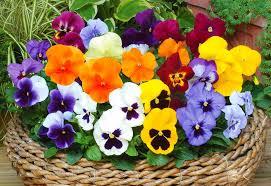 Winter Garden Jobs - garden design garden design with six fabulous winter flowering