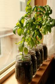 herb pots for windowsill growing food when you have a small space u2014 scratch treehouse