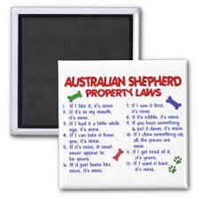 australian shepherd gifts australian shepherd lovers gifts on zazzle