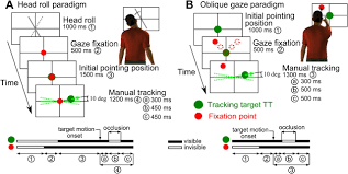 accurate planning of manual tracking requires a 3d visuomotor