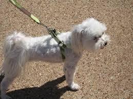 Comfort Flex Dog Harness 60 Best Dog Harnesses Images On Pinterest Dog Harness Small