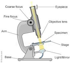 a light microscope image is formed by what do you mean by objective and eyepiece lens in a microscope quora