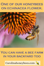 209 best images about save our pollinators on pinterest