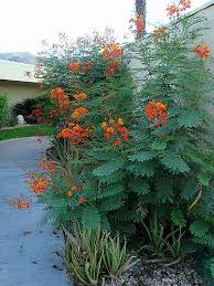 Xeriscape Landscaping Ideas 25 Trending Xeriscaping Ideas On Pinterest Low Water