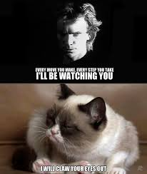 81 best so grumpy images on pinterest grumpy cat grumpy kitty and