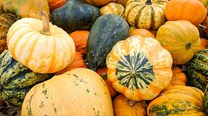 colorful ornamental gourds top view stock photo image 60211764