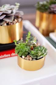 62 best diy succulents images on pinterest plants succulents