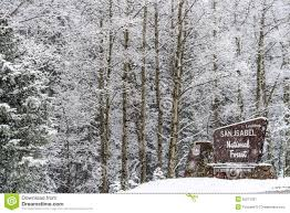 winter snow falling on san isabel national forest editorial photo